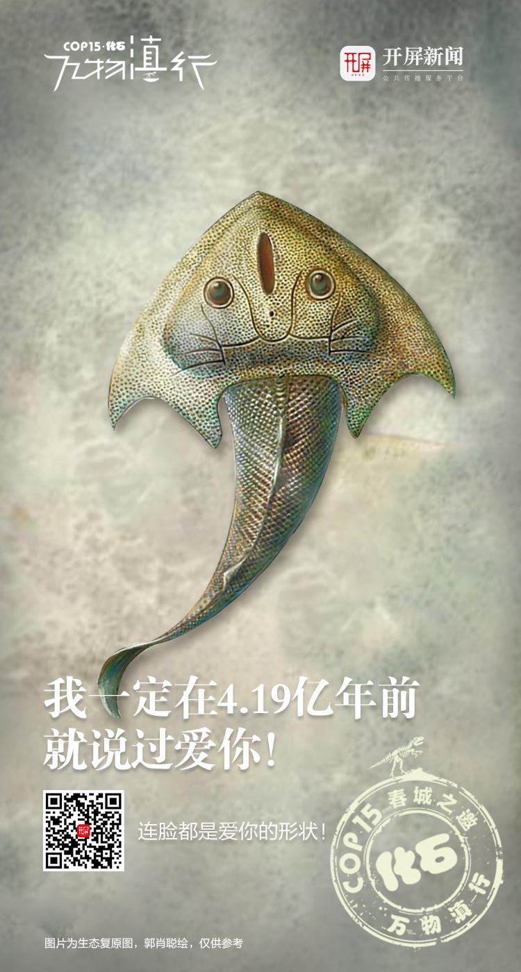 万物滇行 刘氏镰角鱼