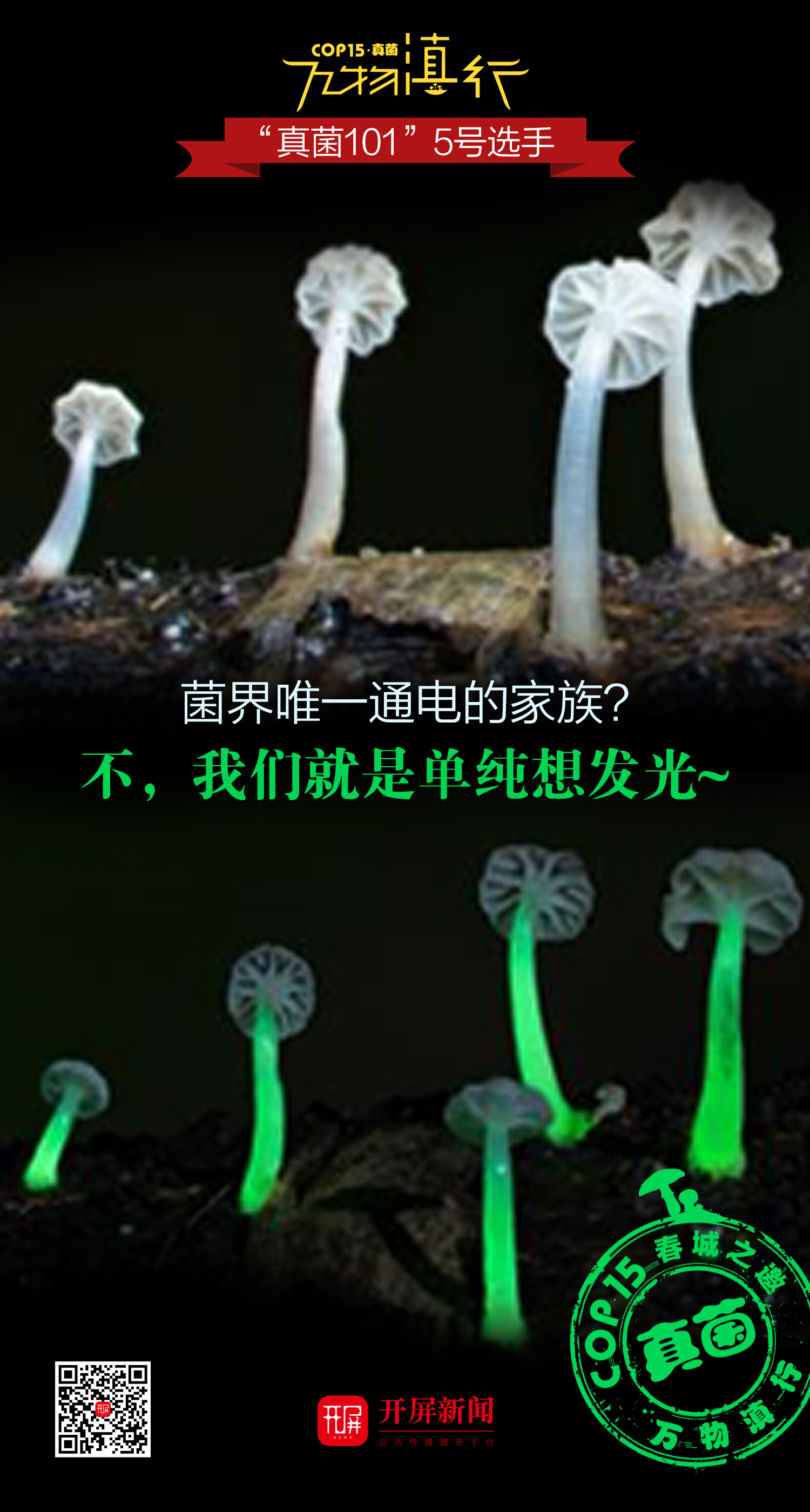 【万物滇行】真菌篇——发光蘑菇海报.jpg