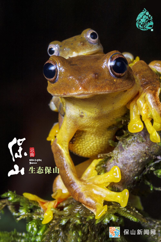 保山推出《生态保山》宣传视频和海报