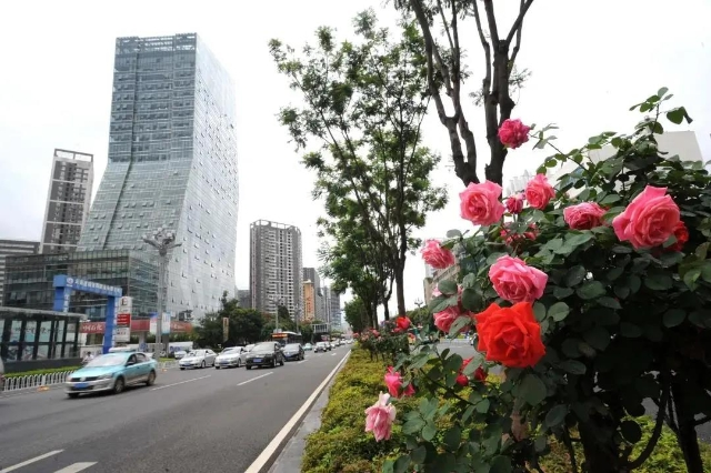程连元向世界推介昆明:相约中国春城 保护美好家园(图自昆报头条)