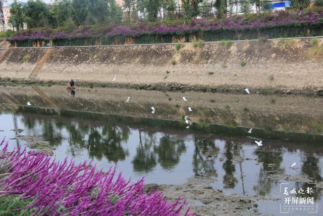 鸟语花香!曲靖城边有个水乡成候鸟天堂(蒋琼波 通讯员 胡吉林 摄影报道)